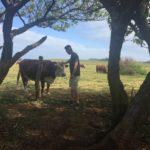 joe loves cows